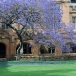 Sydney Uni Small